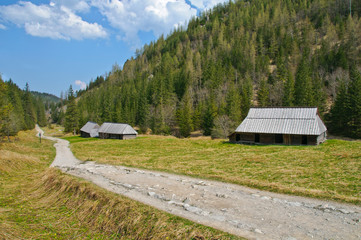 Fototapete - Polish Tatra mountains Koscieliska valley