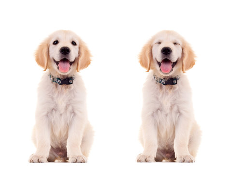 two emotional poses of a cute puppy