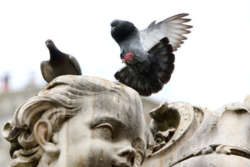 Pigeon lands on the statue