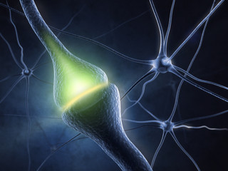 Synapse in human neural system
