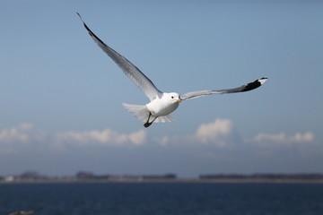 Seagull With Horizon (Bokeh)
