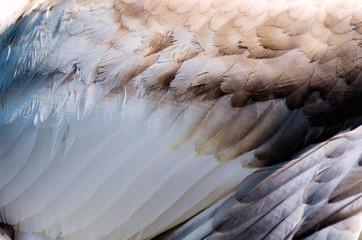 les plumes