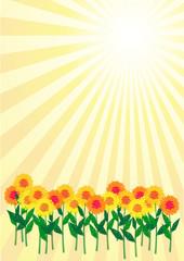 flowerfield_sun_hs