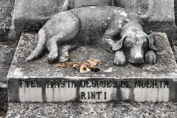 Photo sur Plexiglas Cimetiere Dog grave in Havana, Cuba