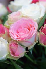 roses et blanches - Rosaceae