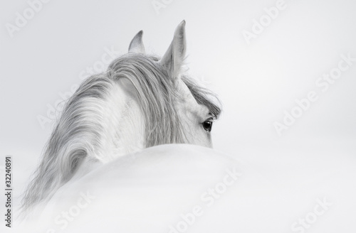 Fototapete Andalusian horse in a mist