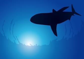 Ocean_Requin