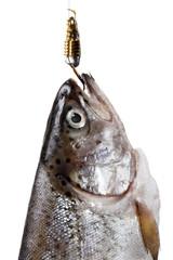 Ein Fisch am Haken