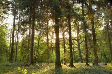 Springtime forest.