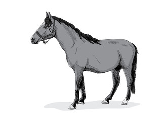 isolated gray standing horse - illustration