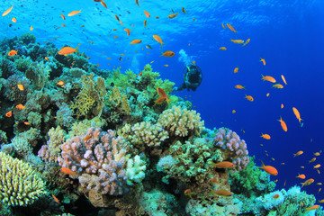 Coral Reef with Scuba Diver in Background