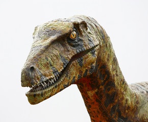 Deinonychus dinosaur head on white