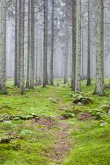 Keuken foto achterwand Bos in mist Hiking trail through a forest