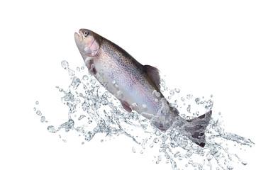Fische 129