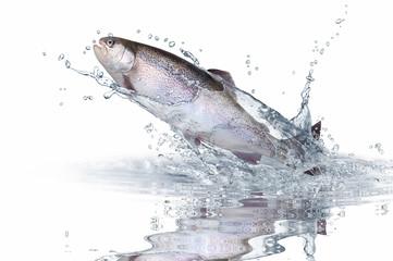 Fische 139
