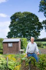 Happy senior man standing in garden holding basket of vegetables