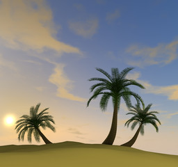 3d render of island with palm-trees and hazy evening sun