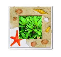 Frame of sea shell on green plant