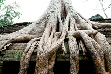 Overgrowned trees at Ta Prohm Temple, Cambodia