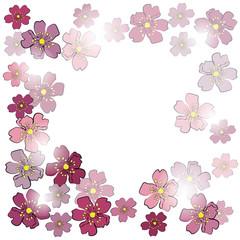 Frame from sakura flowers in sunlight
