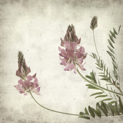 textured old paper background with pink sainfoin