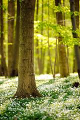 Waldboden im Frühling 4
