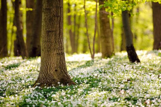 Waldboden im Frühling 3