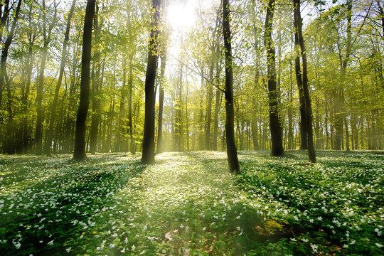 Waldlichtung im Gegenlicht