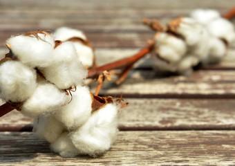 Fleurs de coton, fond