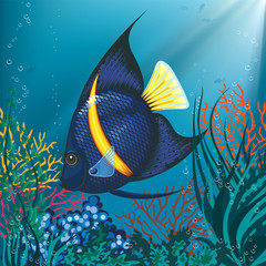 Vector illustration of a tropical fish swimming underwater