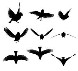 Silhouette: uccello