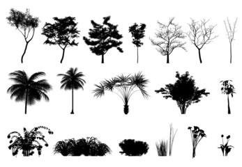 Silhouette: alberi, piante e fiori
