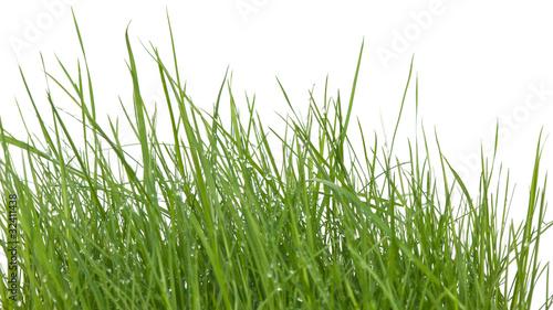 brins d 39 herbe photo libre de droits sur la banque d 39 images image 32411438. Black Bedroom Furniture Sets. Home Design Ideas