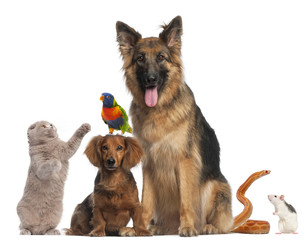 Fototapete - Group of animals in front of white background