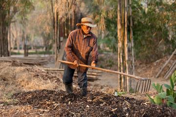 asian farmer working