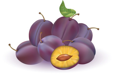 Vector illustration of plums isolated on the white background