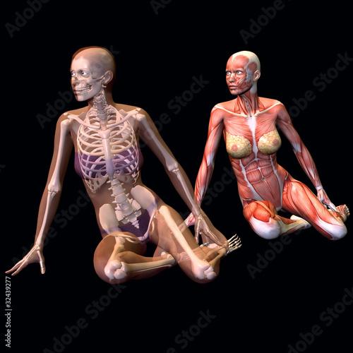 weibliche Anatomie\