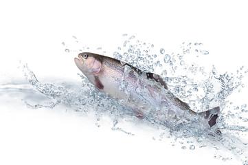 Fische 117