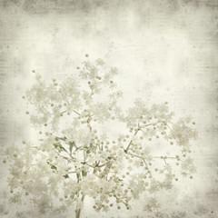 textured old paper background with black elder flowers