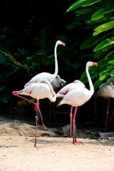 flamingo bird in the zoo