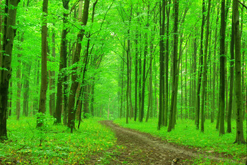 Wall Murals Forest green forest