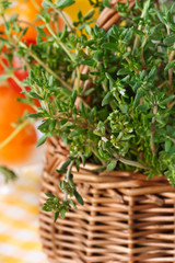 Thyme close-up.