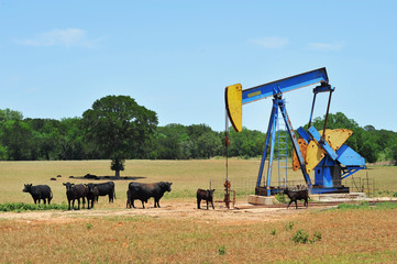 Oil Well Pumper and Brahma Cattle in West Texas.