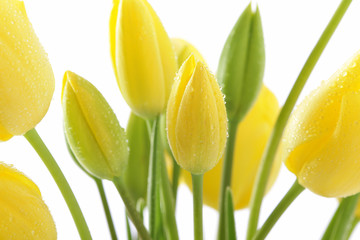 beauty, bouqet, easter, flowers, petals, tulips, yellow