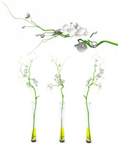 set of 3d orchids