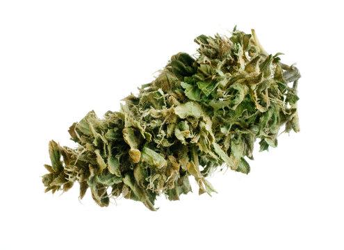 manicured marijuana bud