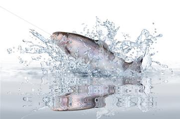 Fische 114