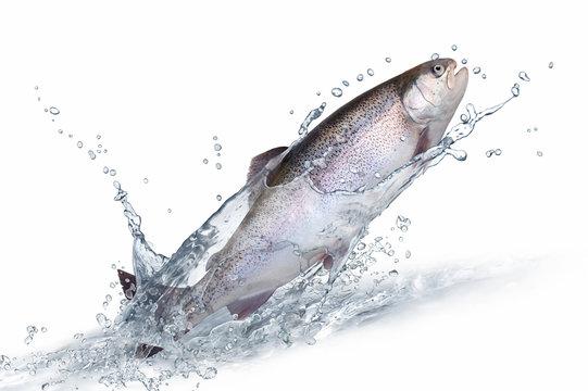 Fische 135