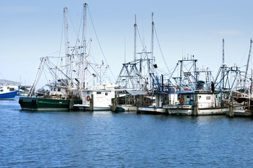Gulf coast shrimp boats in dock