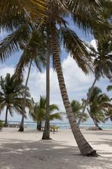 Tropical Paradise at caribbean
